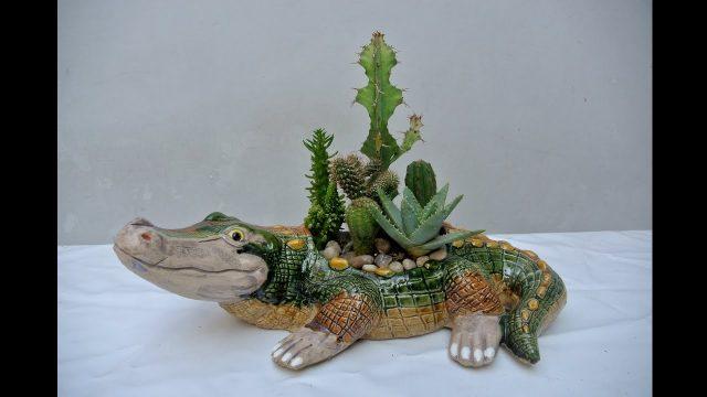 7 cactus de proteccion