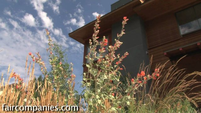 Xeriscaping: native plants and a drought-tolerant yard (LEED landscape in Sun Valley, Idaho)