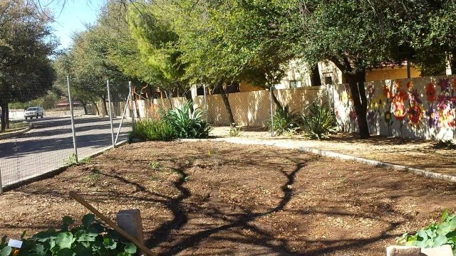 PERMACULTURE COMMUNITY GARDEN IN TEMPE, AZ!!!