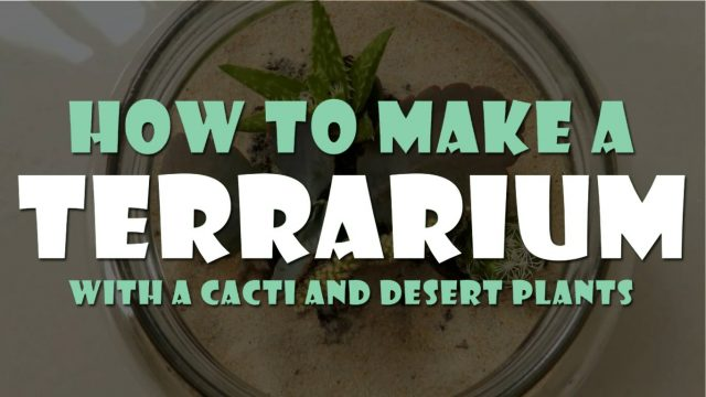 HOW TO MAKE A TERRARIUM WITH CACTI AND DESERT PLANTS