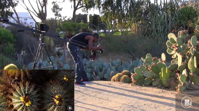 Behind The Art: 'Desert Plant Life' Movie Short