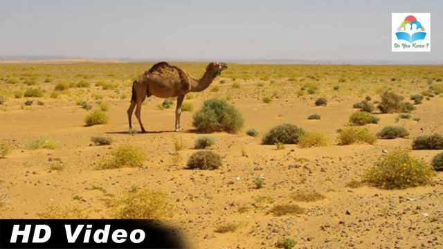 Best Spectacular Desert Plant Life – Amazing NatureCreated By SkRaju | DYK