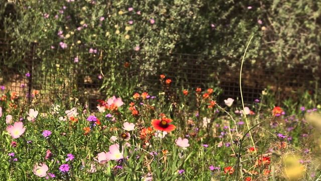 ACTV Presents: Desert Botanical Garden