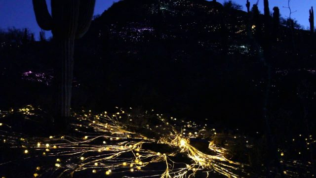 Bruce Munro: Sonoran Lights at Desert Botanical Gardens