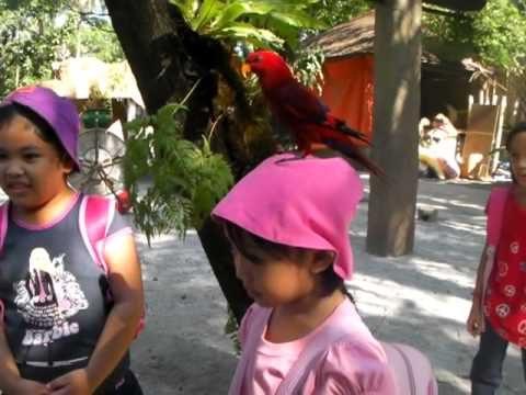 Part 4: JMS 2010 Field Trip to Kinder Zoo (Rizal Park, Manila)