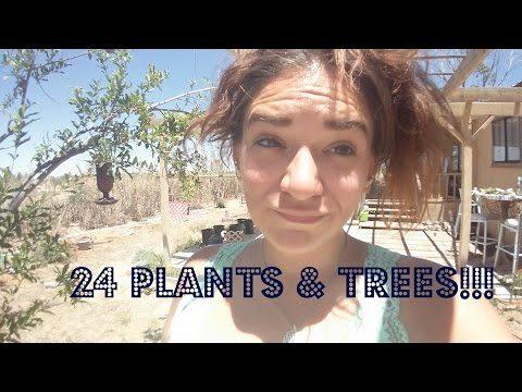 Planting 24 plants & trees in my Az desert garden!!!