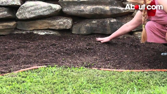 How to Start a Flower Garden