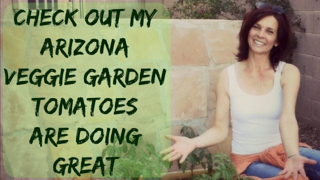 How To Grow Tomato & Pepper Plants Outdoors in Arizona – Organic Raised Bed Vegetable Garden