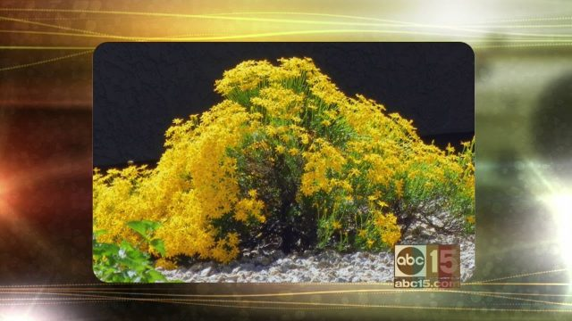 AZ Plant Lady gets ready for fall with 'fuss free' plants