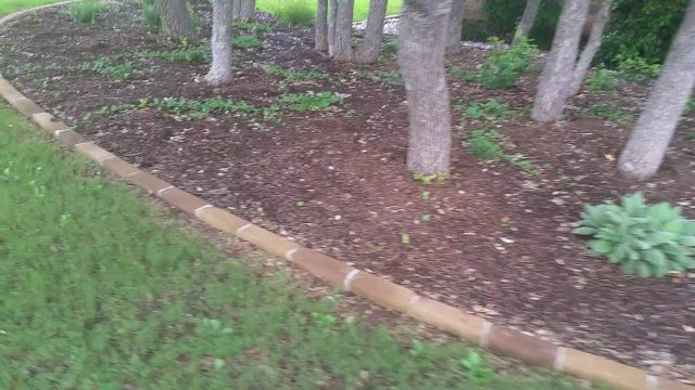 Xeriscape installation of deer resistant landscaping