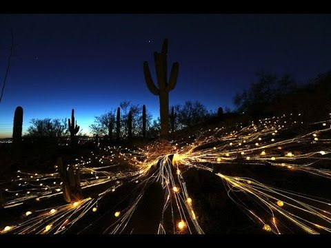 Desert Botanical Garden, Sonoran Lights!