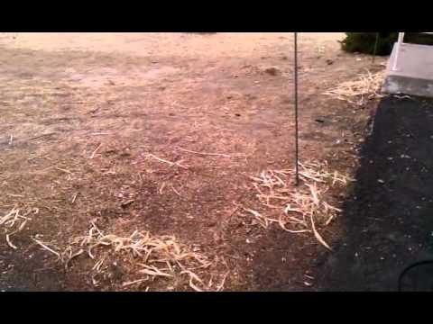 Permaculture Beginnings – Front Yard