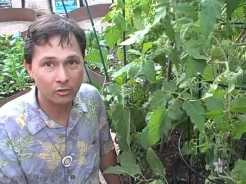 Las Vegas Desert Vegetable Garden after the First Growing Season