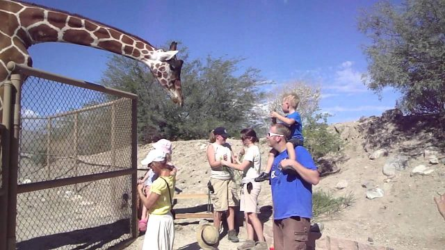 Aidan harrison Dahlk feeding a giraffe @ palm desert california The Living Desert park