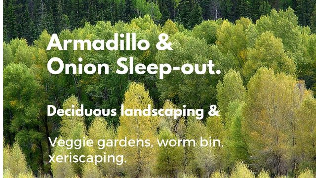 Armadillo and Onion Sleep-out: Deciduous landscaping, xeriscaping, veggie, worm bin, rainwater.