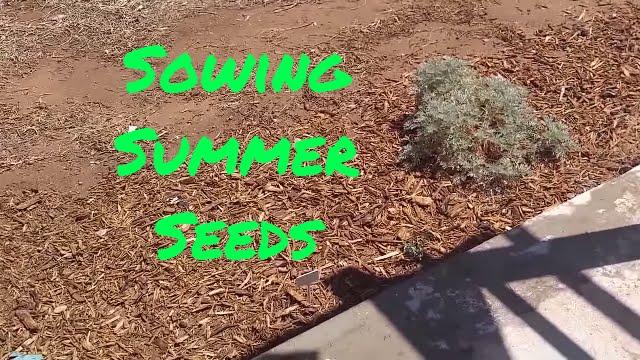 Desert Garden Prepper