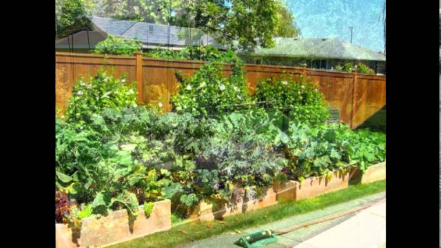 Backyard Garden Ideas – Backyard Garden Ideas Australia