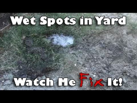 Wet Spot in Yard – Fix Irrigation Leak after desert landscape conversion
