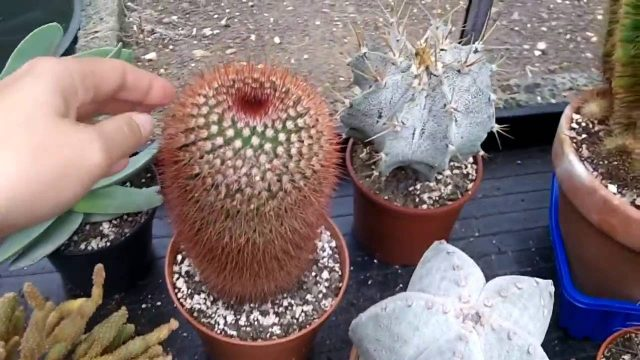 My Cacti & Succulent plants end of July update