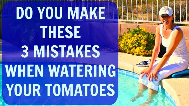 Watering Tomato Plants & Signs Of Overwatering – How To Water Tomatoes & Container Plants in Arizona
