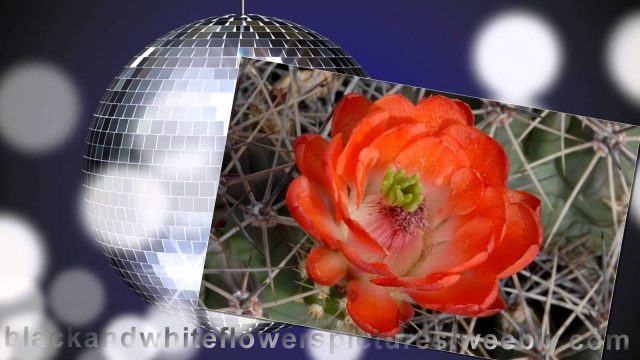 beautiful arizona cactus flower garden ideas pictures dessert plant photography free website