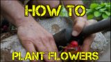 How to Plant FLOWERS the EZ Way – Landscaping and Gardening Tips