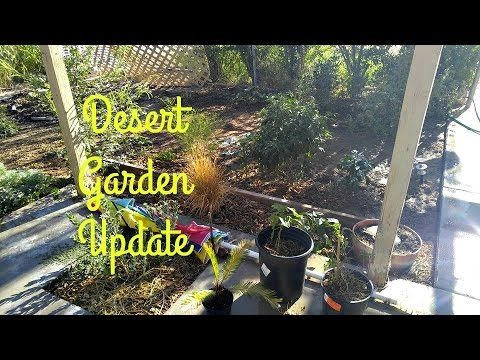 Desert Garden (back to eden style) after 1 wk with NO WATER!