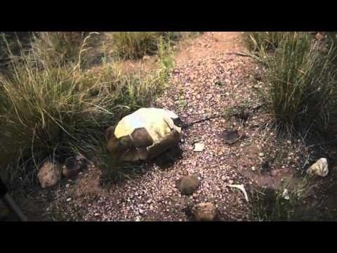 Walk Across Arizona Extras: Rattle Snake + Desert Tortoise Shell