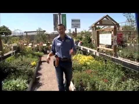 How To Choose Drought Resistant and Drought Tolerant California Native Plants