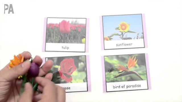 Montessori 3-part cards and matching activity presentation