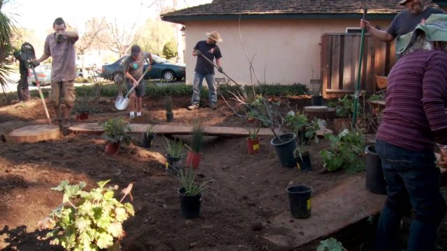 Installing a California native plant garden