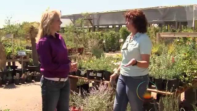Landscaping Southwest Tv: season 1-episode 8:Native Plants