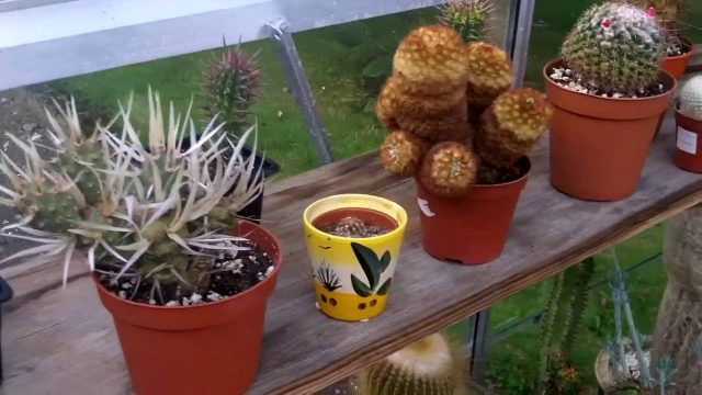 My Cacti & Succulent Plants end of August update