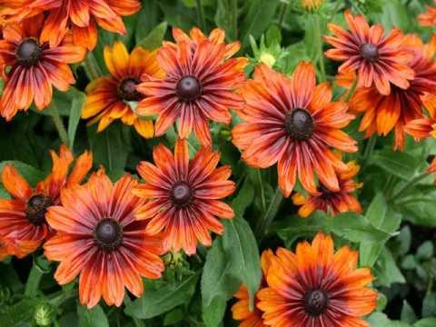 Garden Flowers   Gardening & Landscaping Ideas With Pics
