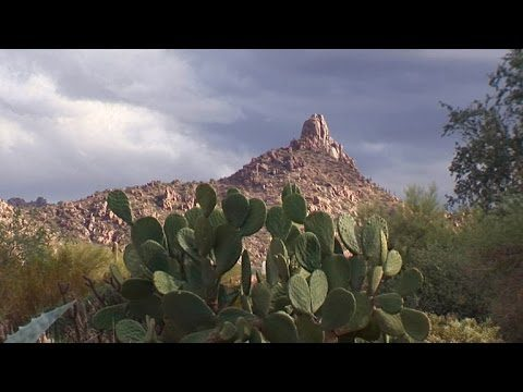 Nature: Arizona's Sonoran Desert