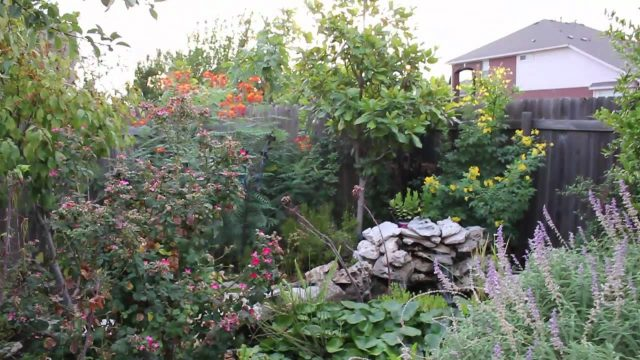 Lisa's Landscape and Design: Drought Tolerant Plants: Part 1