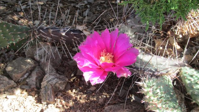 A walk through the Eldorado Cactus Garden
