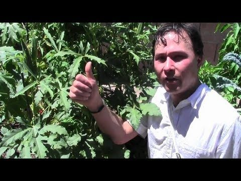 Urban Summer Desert Vegetable Garden Tour and Tips