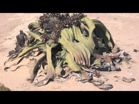 Desert Biome Plants Video (Seisen 3rd grade)