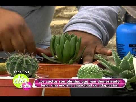 Conozca los beneficios de tener sembrar un cactus en el hogar