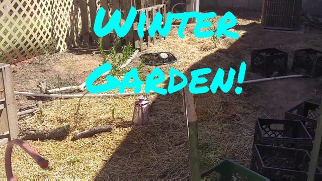 Starting my WINTER desert garden!!!