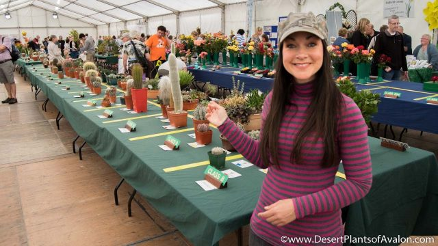 The Northern Ireland Cactus & Succulent Show, Belfast 2016