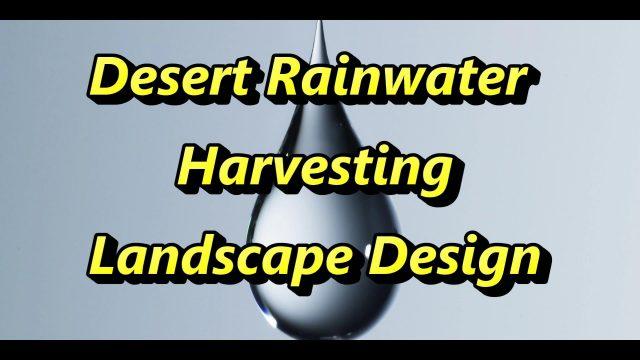 Rainwater Harvesting Desert Landscaping