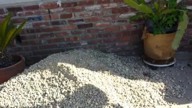 Replaced Lawn With Landscape Gravel Pt.1