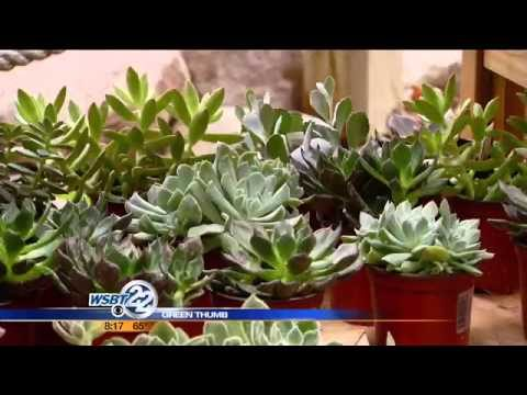 Green Thumbs: Summer succulents for landscaping