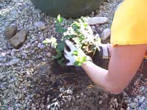 Planting a Desert Plant