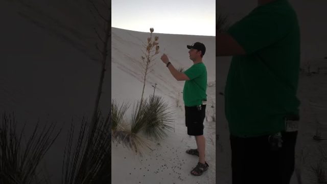White Sands Monument Desert Plant