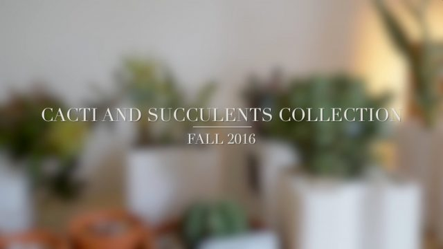 Cacti and Succulents Collection Update – Fall 2016