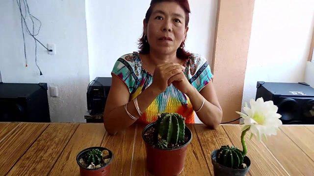 Cómo Hacer Que Tus Cactus Florezcan En Casa