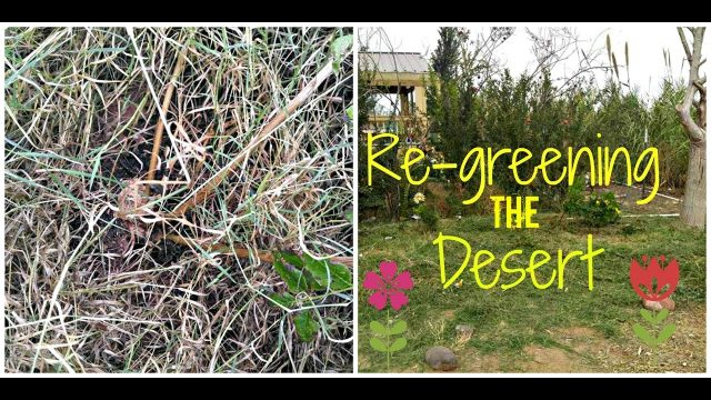 Results sheet mulching in the desert : Permaculture : Desert Gardening : Back to Eden